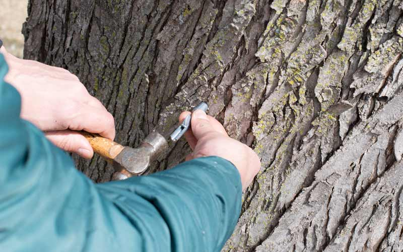 Jamie tapping a tree
